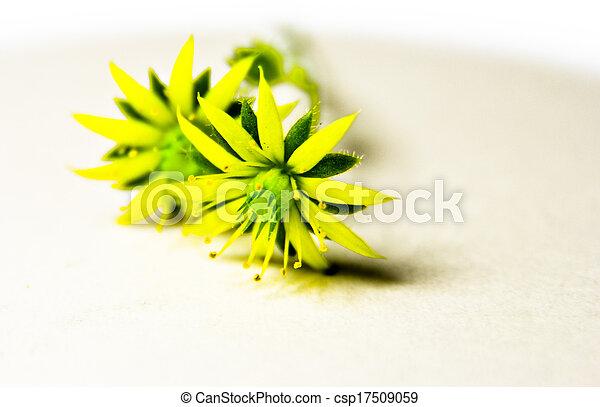small flower - csp17509059