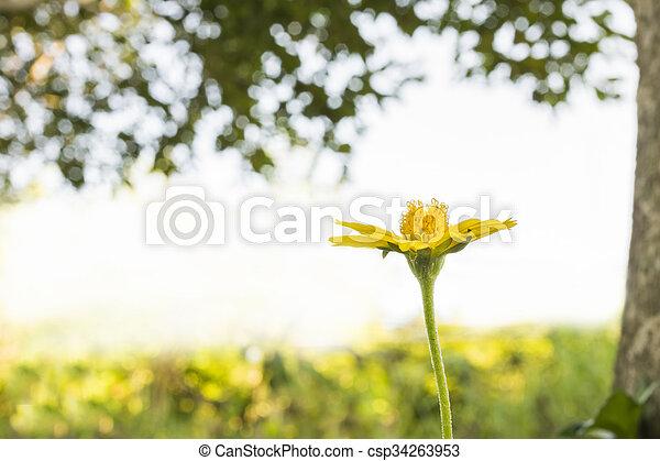 small flower - csp34263953