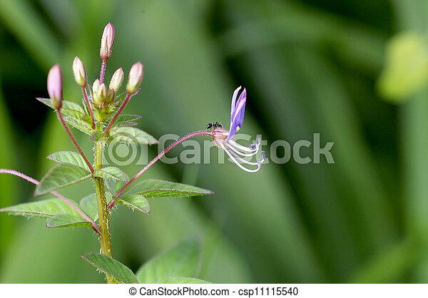 small flower - csp11115540