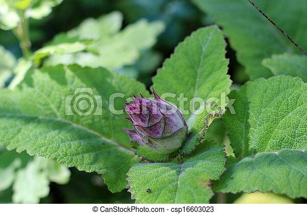 Small flower - csp16603023