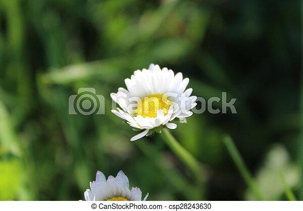 small flower - csp28243630