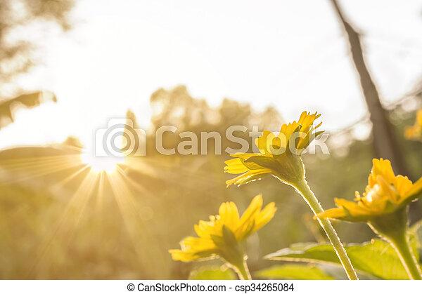 small flower under evening sun ligh - csp34265084