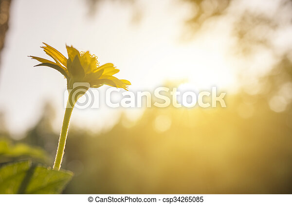 small flower under evening sun ligh - csp34265085