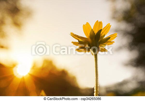 small flower under evening sun ligh - csp34265086
