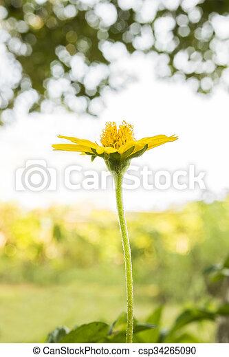 small flower under evening sun ligh - csp34265090