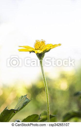 small flower under evening sun ligh - csp34265107