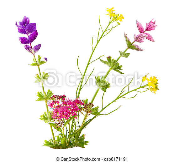 Small flowers - csp6171191