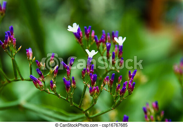 small flowers - csp16767685