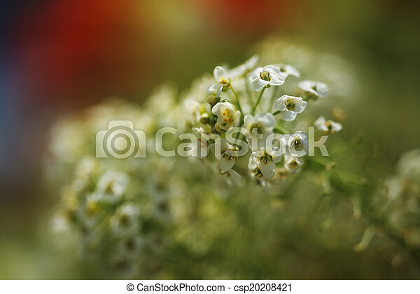 Small Flowers - csp20208421