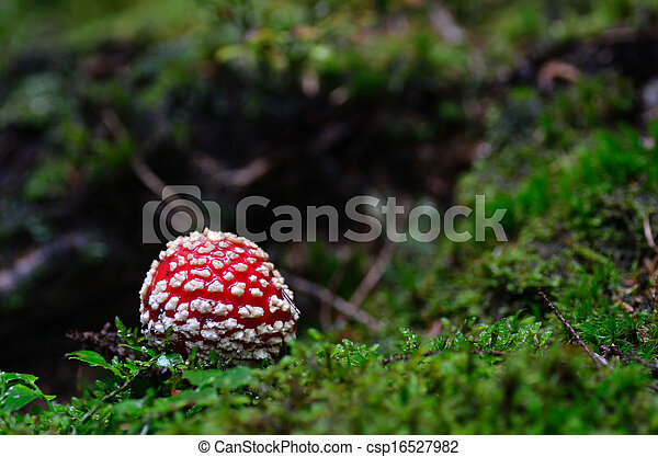 small fly agaric - csp16527982