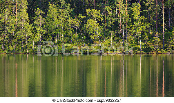 Small forest lake at summer - csp59032257