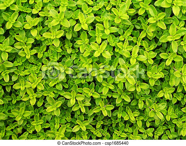 Small green leafs background - csp1685440