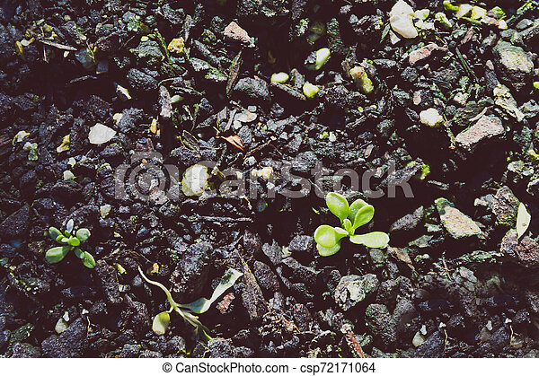 small green seedlings popping up from the ground - csp72171064