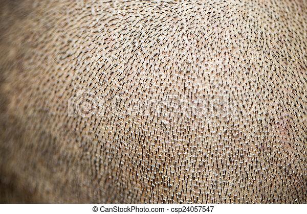 small hairs on the skin. macro - csp24057547