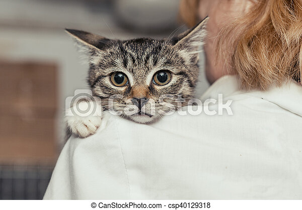 Small kitten into the hands of the physician - csp40129318