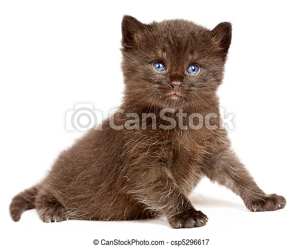 Small kitten on a white background - csp5296617