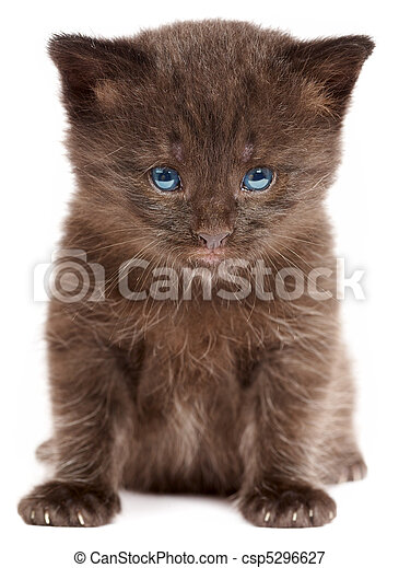 Small kitten on a white background - csp5296627
