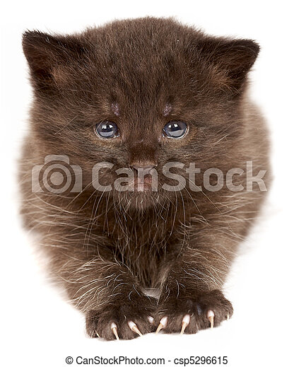 Small kitten on a white background - csp5296615