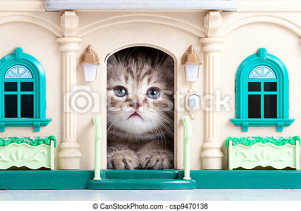 small kitten sitting in toy house - csp9470138