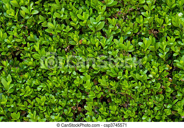 small leafs detail - csp3745571