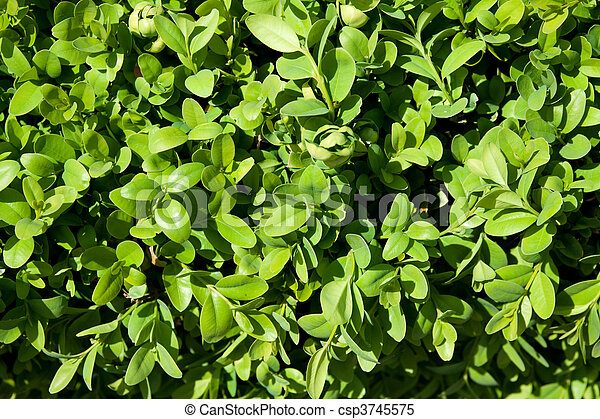 small leafs detail - csp3745575
