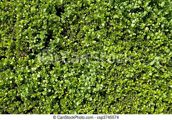small leafs detail - csp3745574