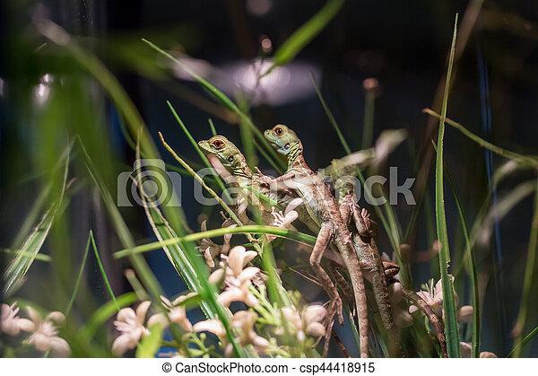 Small Lizard In Terrarium With Grass