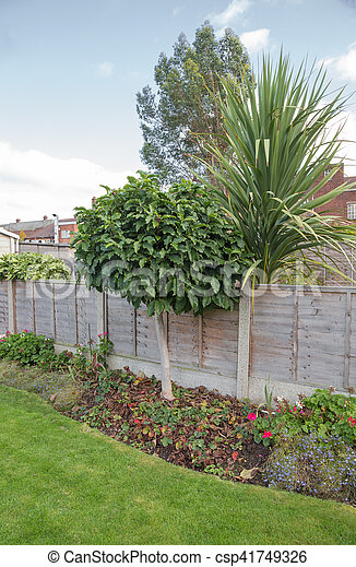 Small Magnolia Tree In The Garden Flower Bed With A Fence Behind