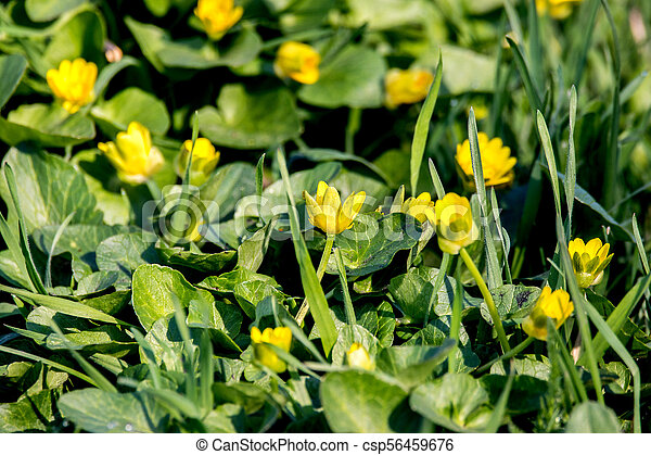 Image Of A Small Meadow Yellow Flowers In A Green Grass