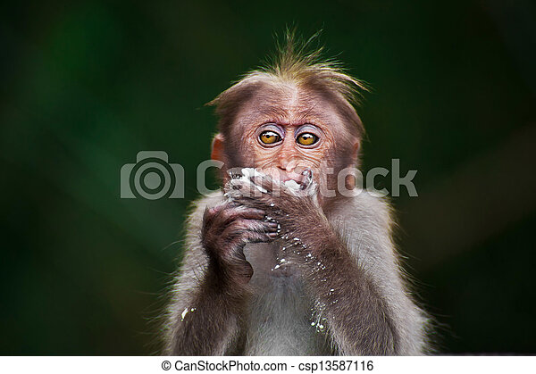 Small monkey eating food in bamboo forest. South India - csp13587116