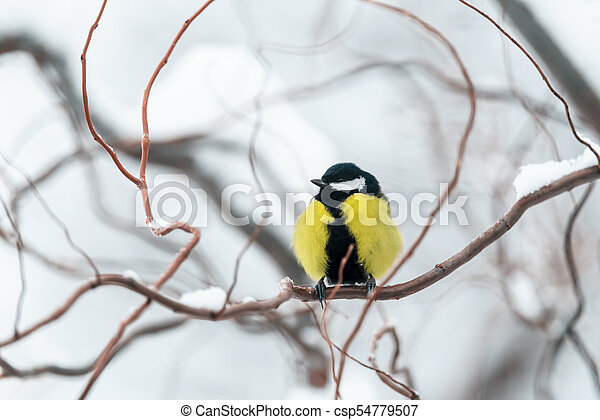 Small parus on twig close up - csp54779507