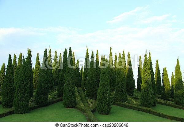 Small Pine Tree With Garden Landscpae Design   Csp20206646