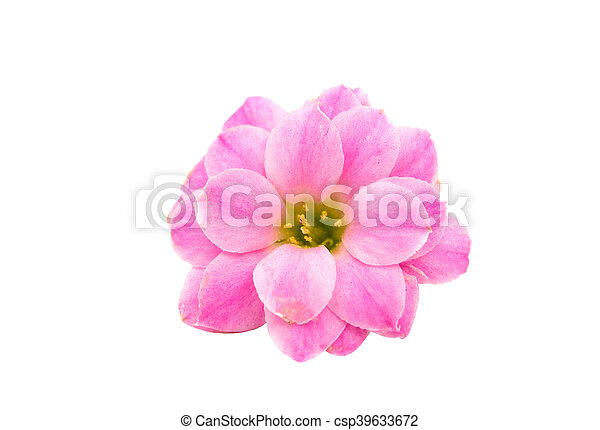 Small pink flowers isolated on white background picture search small pink flowers isolated csp39633672 mightylinksfo