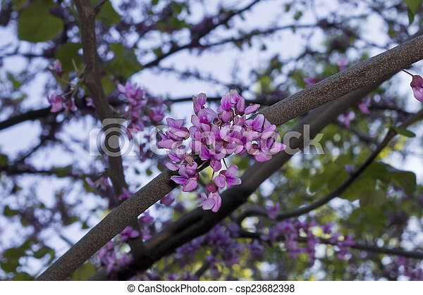 Small pink flowers on a tree branch small pink flowers on a tree branch csp23682398 mightylinksfo