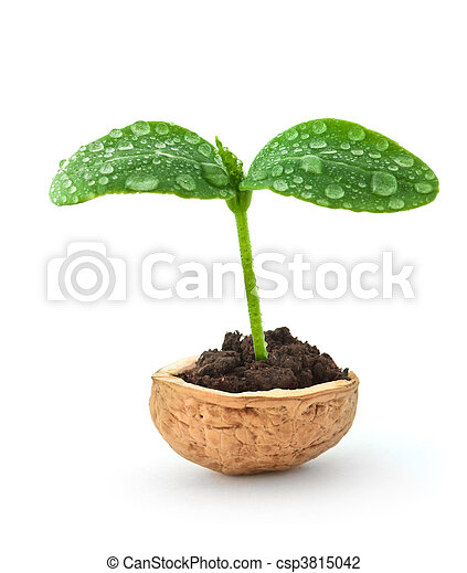 Small plant in a nutshell - csp3815042