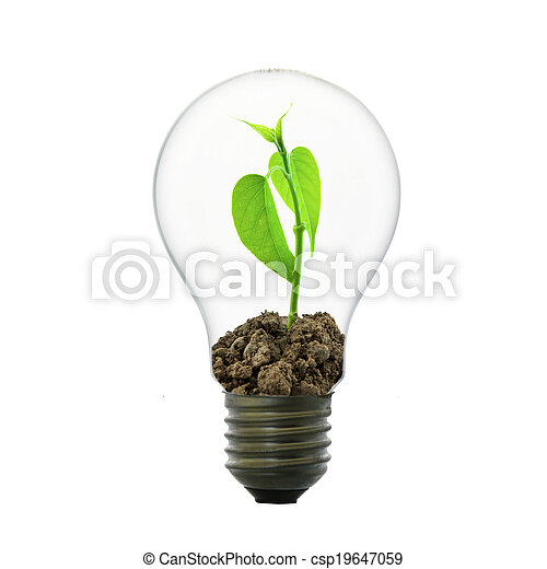 Small plant in light bulb  - csp19647059