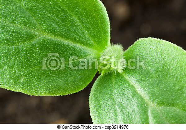 Small plant of cucumber - csp3214976
