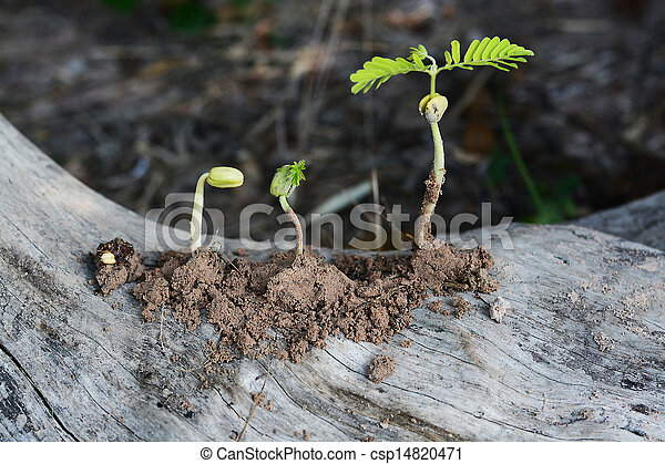 Small plant on soil - csp14820471