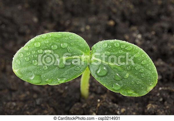 Small plant - csp3214931