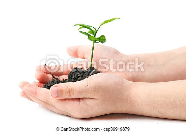 small plant - csp36919879