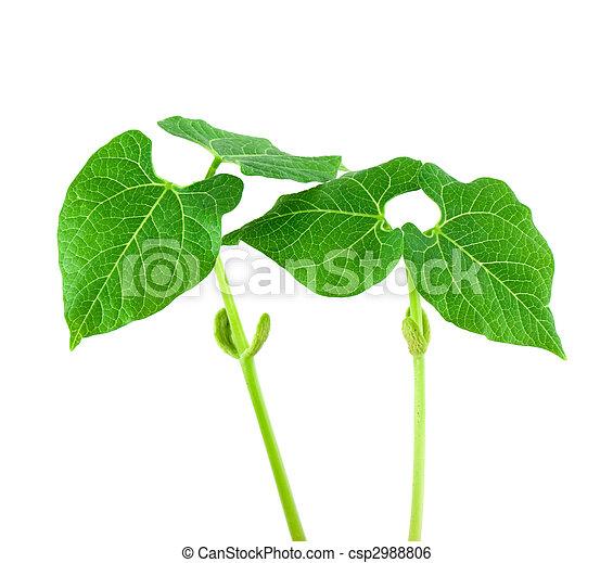 Small plant - csp2988806