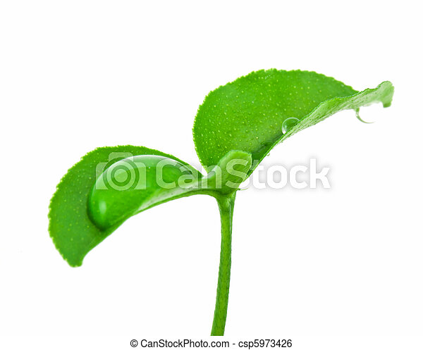 Small plant - csp5973426
