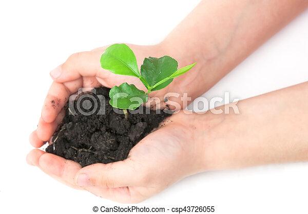 small plant - csp43726055