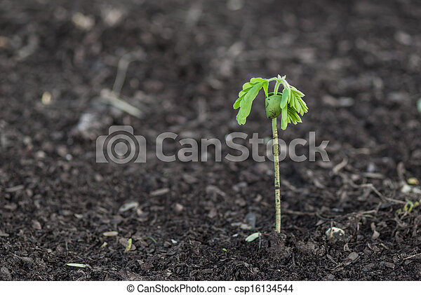 Small plant - csp16134544
