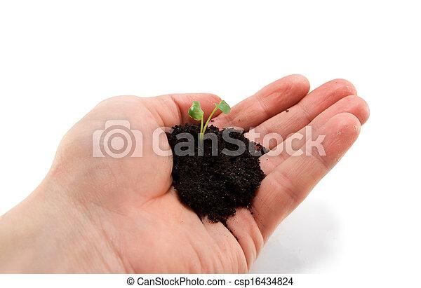 small plant - csp16434824