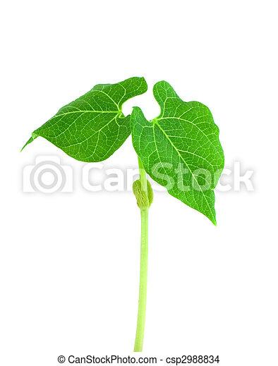 Small plant - csp2988834