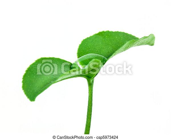 Small plant - csp5973424