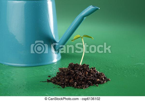 small plant - csp6136102
