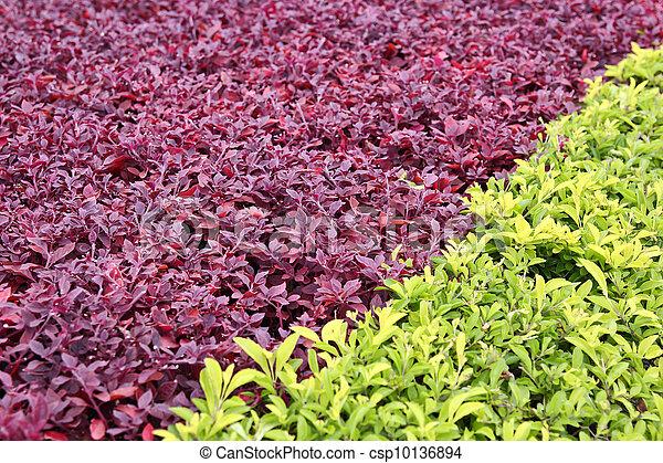 Small Plant - csp10136894