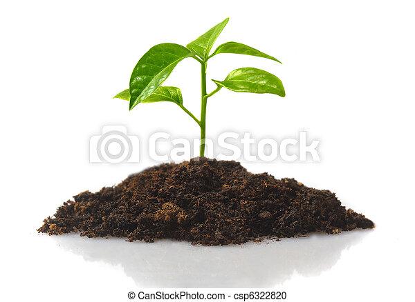 small plant - csp6322820